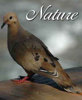 Nature Photographic Services Main Image